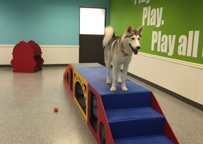 Happy Guest Enjoying Dog Daycare, Furs and Feathers Resort, West Palm Beach Florida
