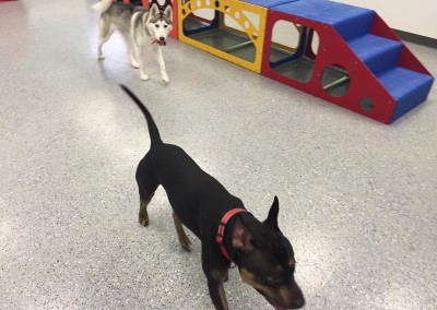 Happy Guests Enjoying Dog Daycare, Furs and Feathers Resort, West Palm Beach Florida